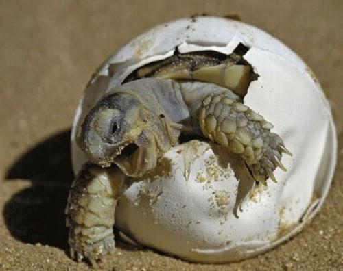 baby-turtle-egg